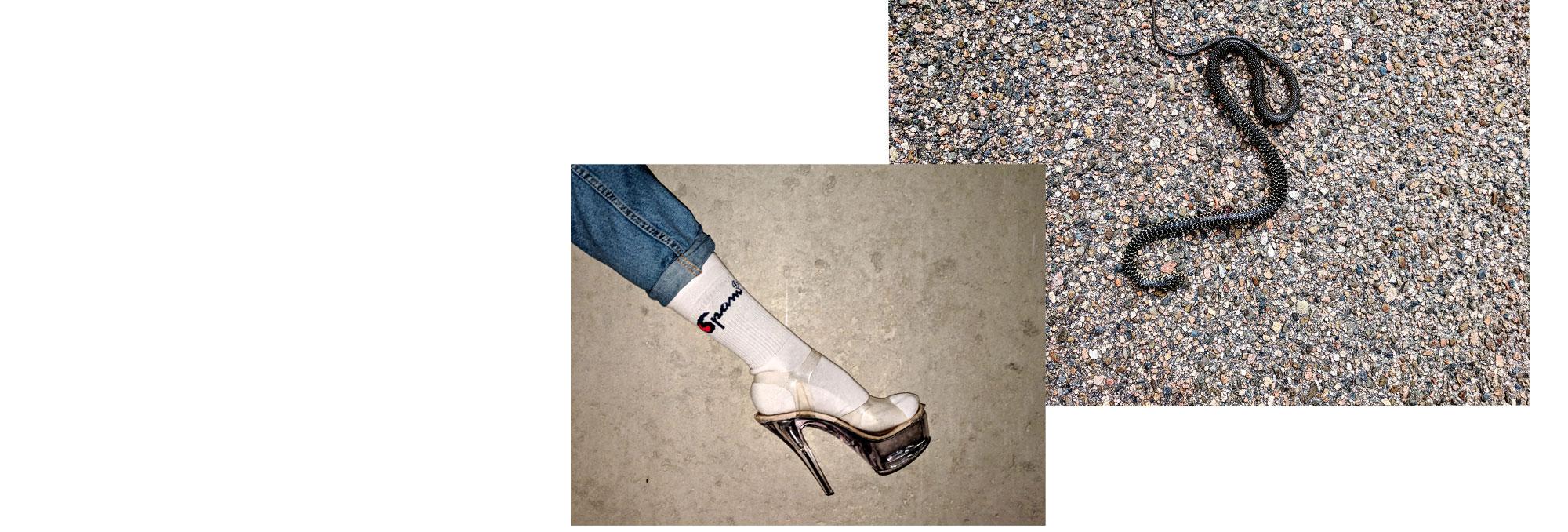 Original Spampion socks with snake